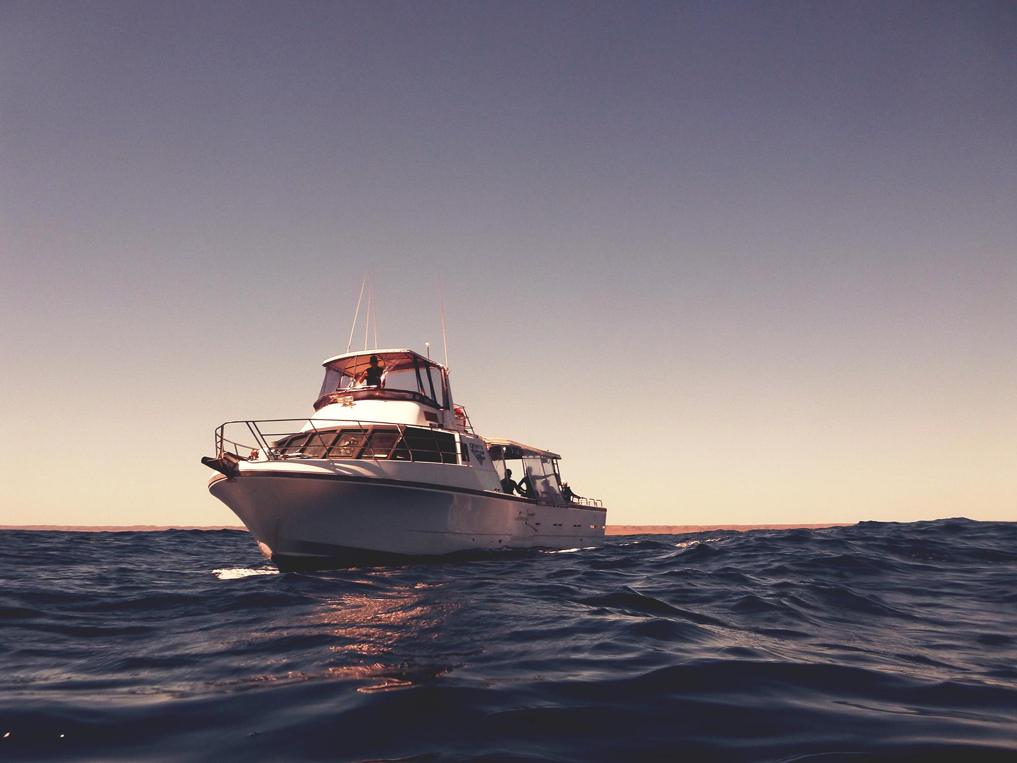 whale shark tourboat, ningaloo reef